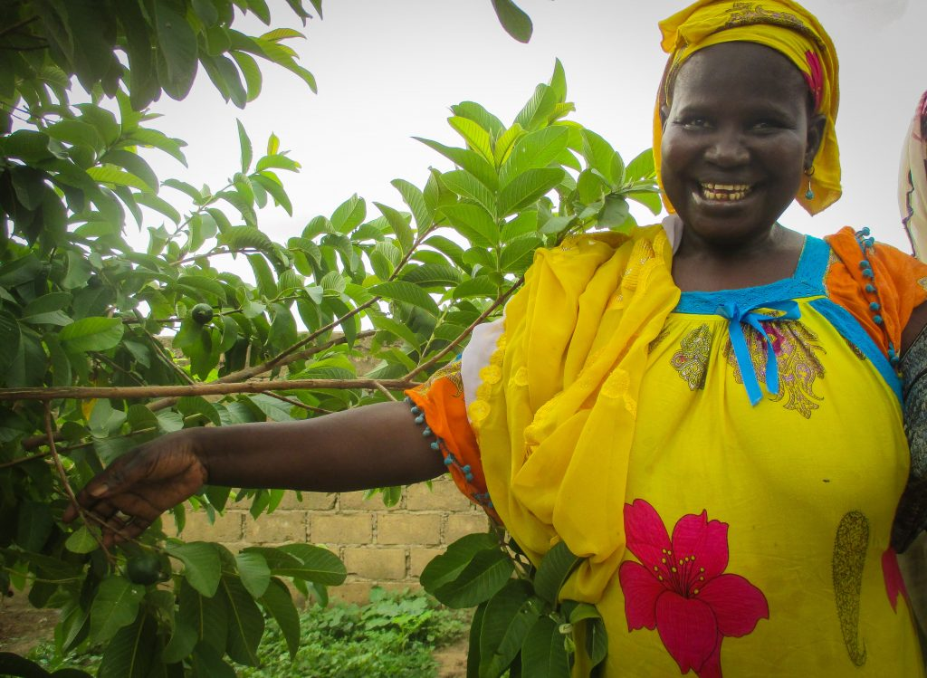 Photos from Senegal: Fass Kane's fruit trees